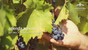 Vino biologico siciliano Dei Principi Di Spadafora