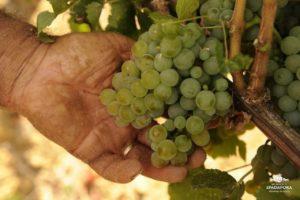 vendita-e-produzione-vino-biologico-dei-principi-di-spadafora-Sicilia-Italia