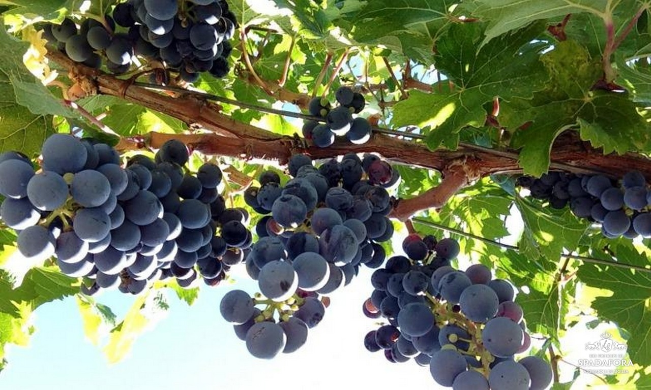 vendita-online-vino-biologico-Sicilia-Italia