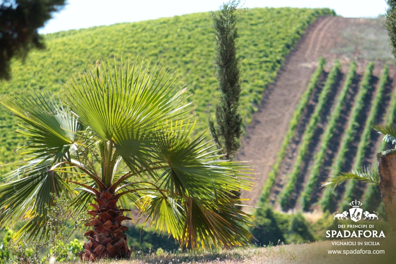 acquisto-vino-biologico-per-occasioni-speciali