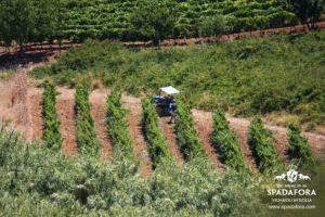 agricoltura-sostenibile-in-sicilia