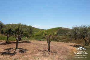 produzione-e-vendita-vino-biologico-siciliano