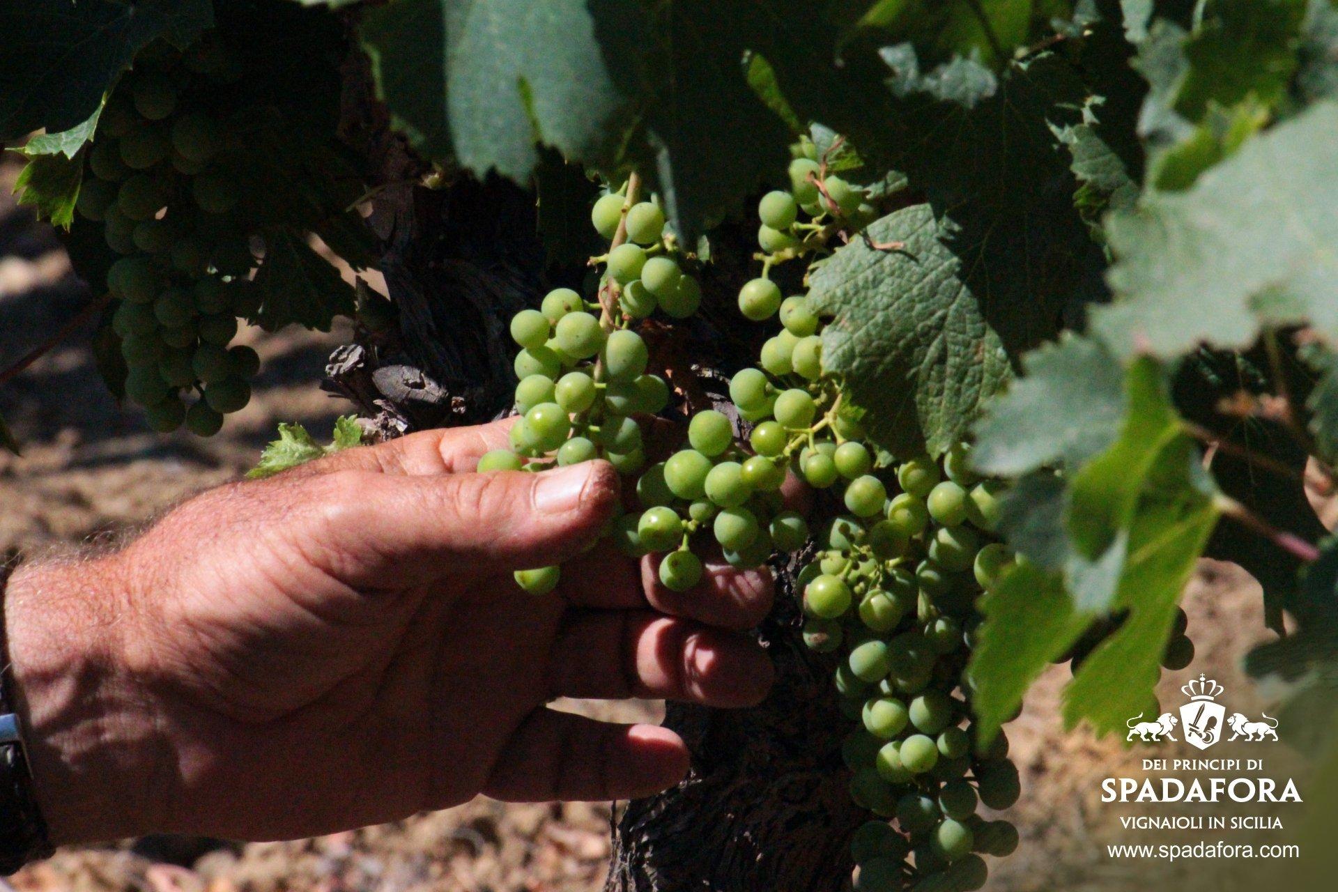 vendita-online-vino-biologico-da-agricoltura-sostenibile