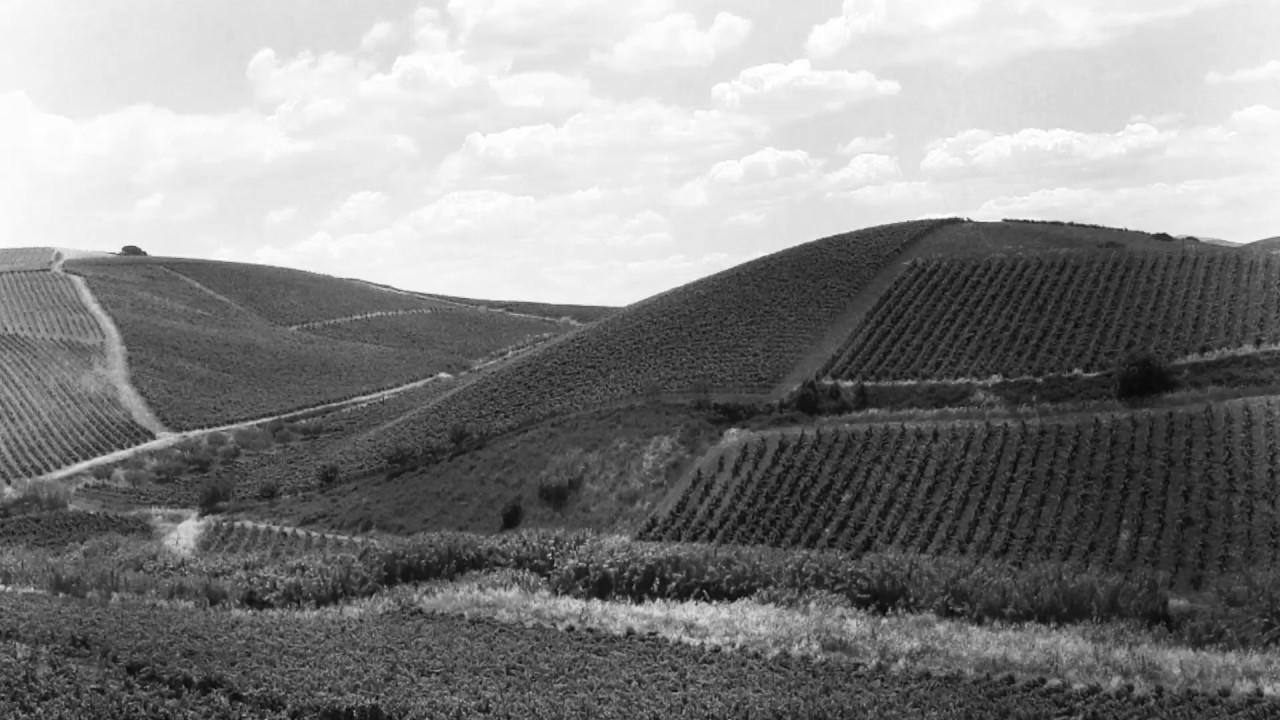 Dei Principi di Spadafora, produttori di vino biologico