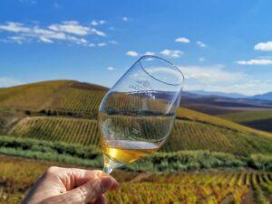 vino biologico Grillo, cantina Spadafora