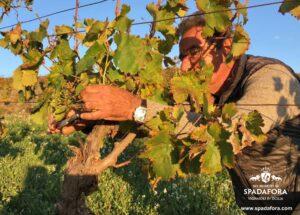Compra online il tuo vino biologico e ricevilo comodamente a casa tua in tempi rapidi.