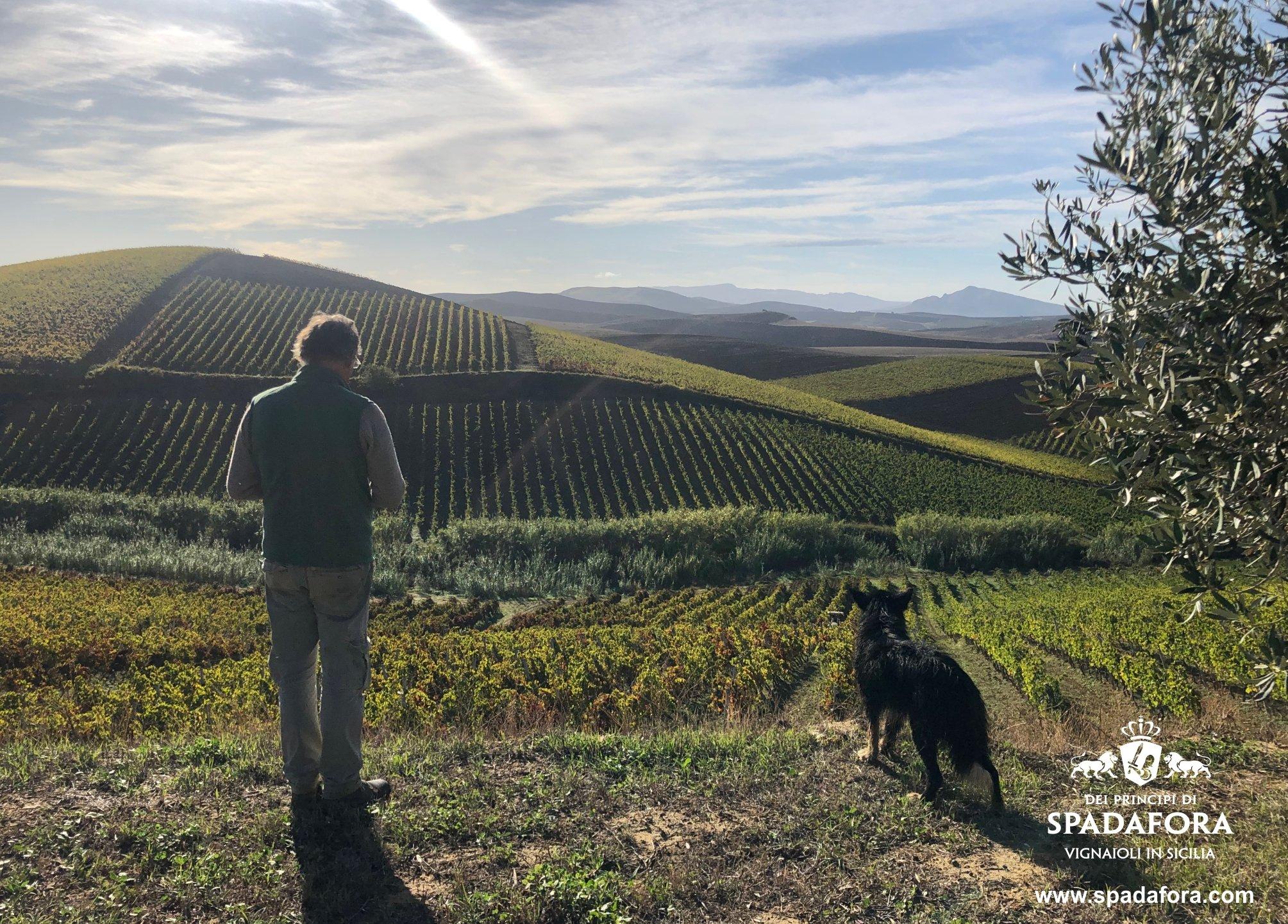 Vendita vino biologico da agricoltura sostenibile, Dei Principi di Spadafora