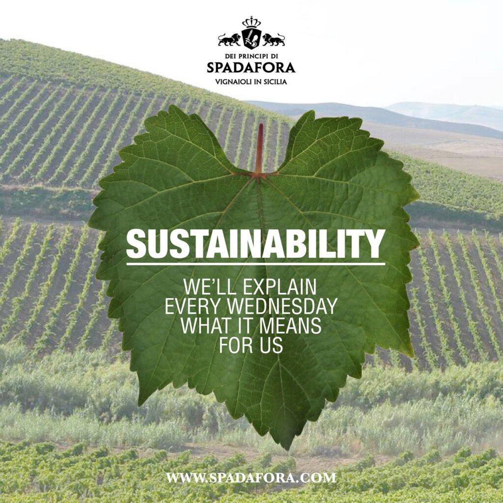 sustainability organic wine