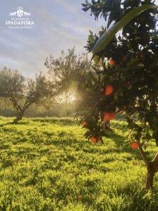 produttore-di-vino-biologico-siciliano-dei-principi-di-spadafora