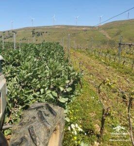vendita online-vino-biologico-siciliano da agricoltura biologica